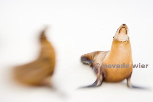 2008012_Galapagos_0168