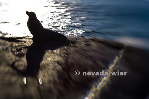 2008012_Galapagos_0671